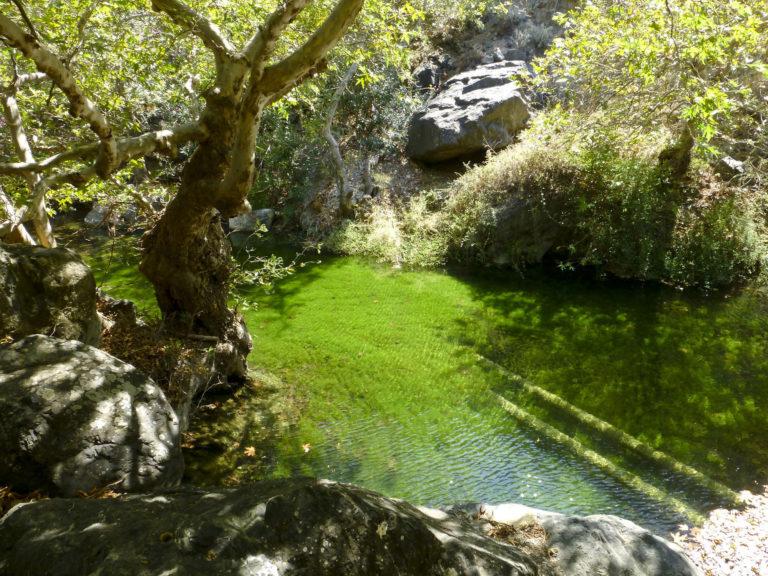 Richtis_gorge_pond_-_panoramio